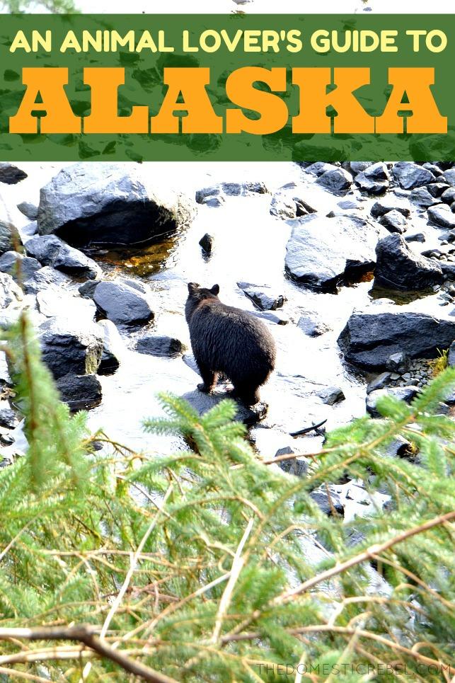 An Animal Lover's Guide to Alaskan Cruising! #princess #ad