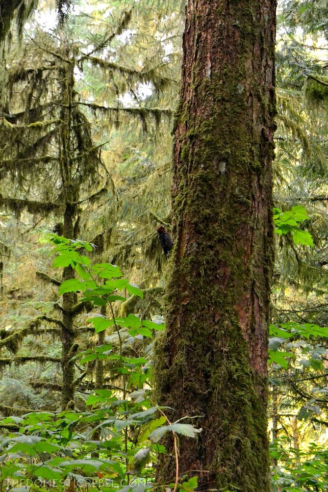 Alaska Wildlife Sanctuary