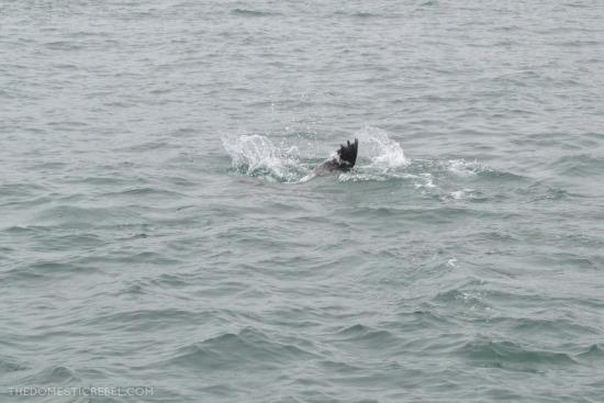 Whale watching in Juneau, AK