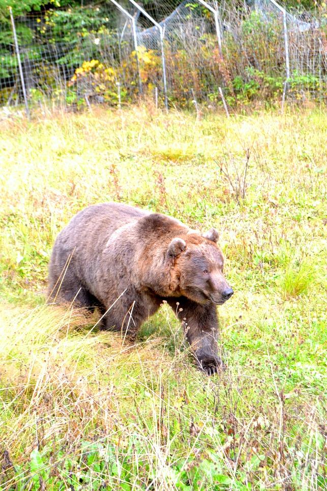 Kroschel Wildlife Refuge in Alaska