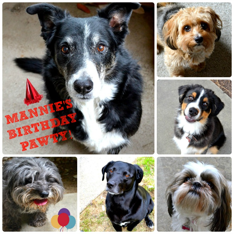 collage of six different dogs of varying breeds