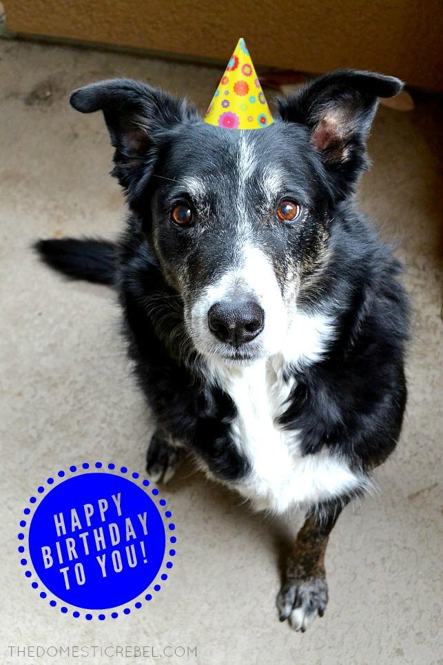 photo of a border collie wearing a birthday party hat